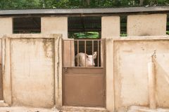Can help purchase animals for farms at seminaries as they work to be sustainable.